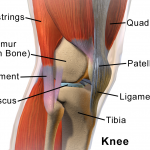 Why Do Joints 'POP'?