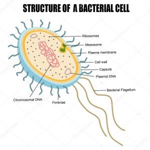 Difference between Archaebacteria and Eubacteria-1