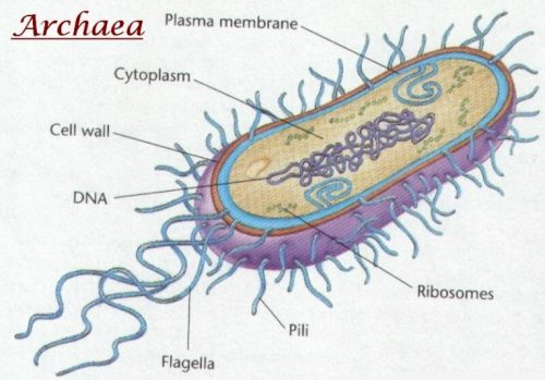 Difference between Archaebacteria and Eubacteria