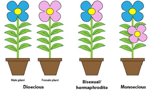 Incomplete flowers are generally unisexual people