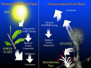 Difference Between Phototrophs and Chemotrophs
