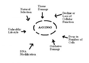 Difference between Biological Age and Chronological Age
