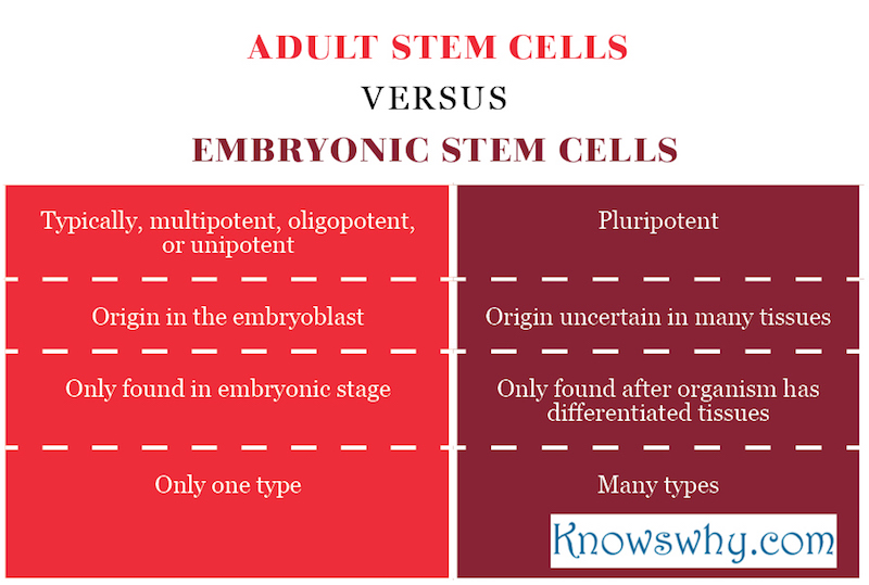 Consider, that adult stem cells versus embryonic agree