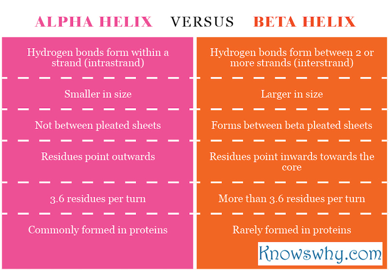 Difference between alpha helix and beta pleated sheet.