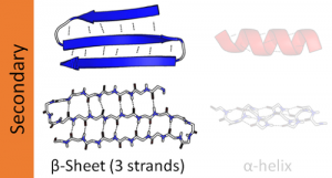 Difference between Alpha helix and Beta helix-1