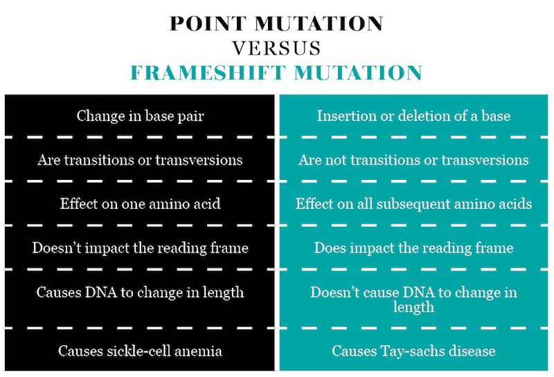 POINT MUTATION VERSUS FRAMESHIFT MUTATION
