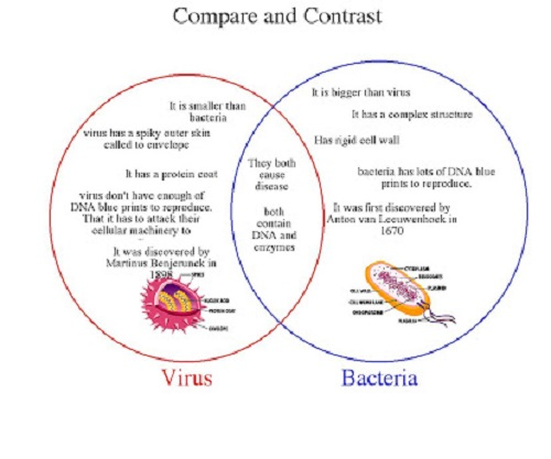 Similarities Between a Virus and Bacteria