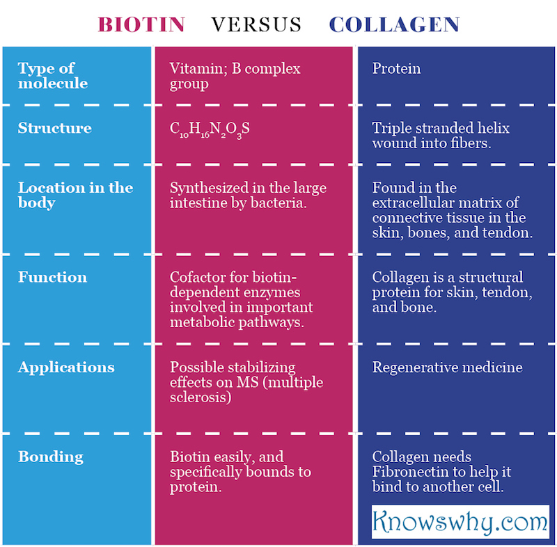 Biotin VERSUS Collagen