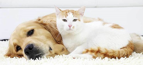 Similarities Between Cats and Dogs