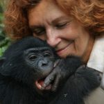 Similarities Between Humans and Chimpanzees