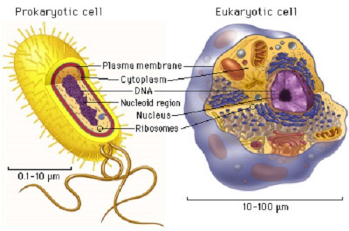 Similarities Between Prokaryotic and Eukaryotic Cells